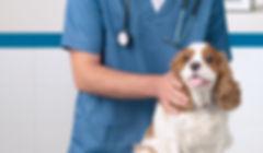 Vétérinaire avec chien