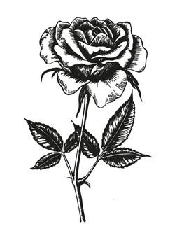 Rose_Zeichenfläche_1