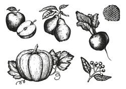 HerbstIllus_Zeichenfläche_1