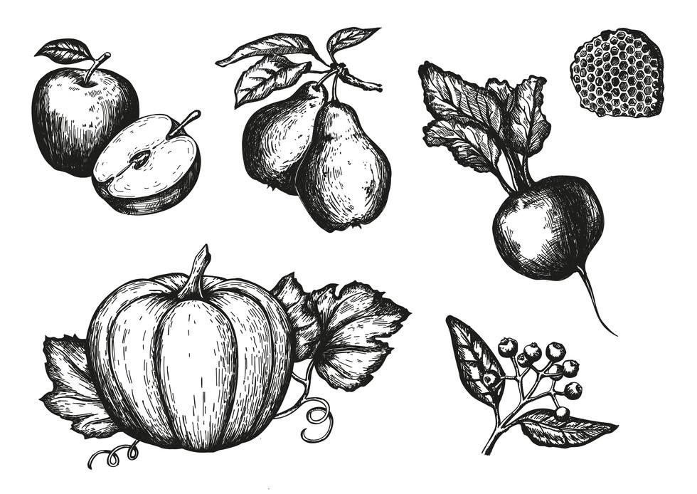 Herbst Illustrationen