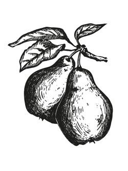 Pear_Zeichenfläche_1