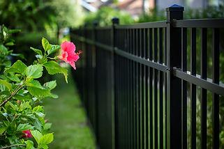 Aluminum fence and  hibiscus flower.jpg