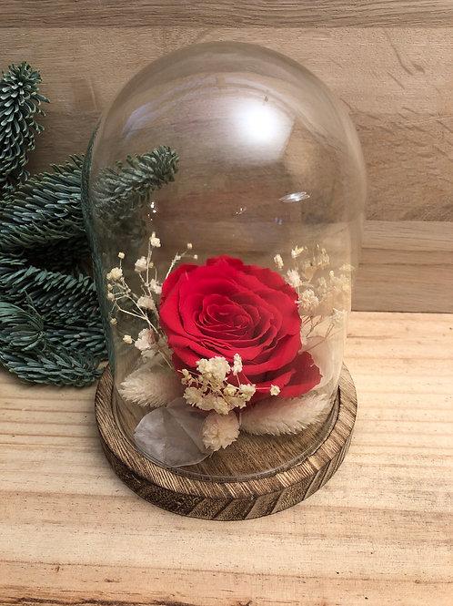Rose éternelle #102