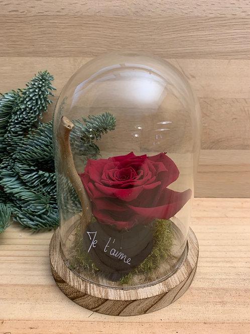 Rose eternelle #72