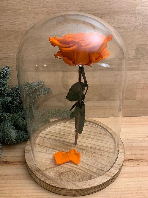 Rose eternelle #30