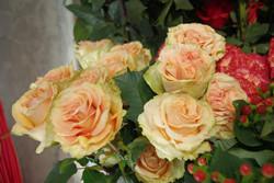 Rose Orange - Finess