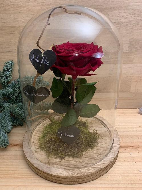 Rose eternelle #19