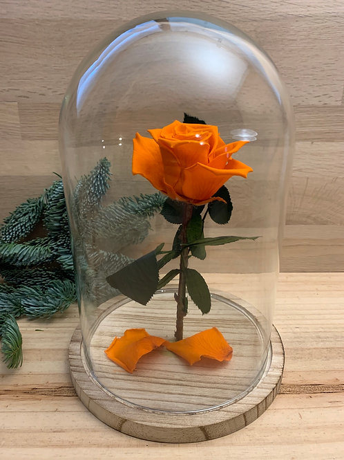Rose eternelle #68