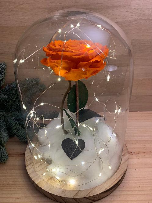 Rose eternelle #8
