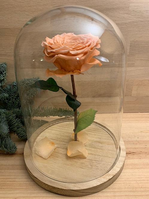 Rose eternelle #26