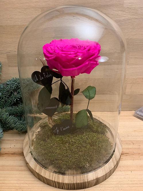 Rose eternelle #21