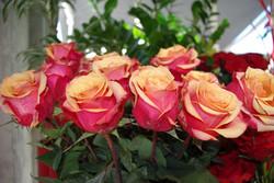 Rose Rouge orangé - Cherry Brandy