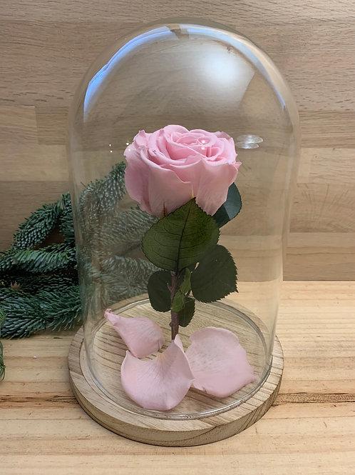 Rose eternelle #69