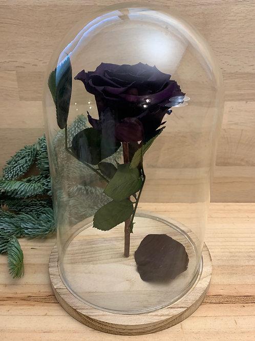 Rose eternelle #62