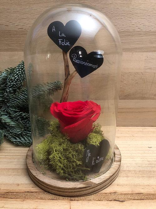 Rose éternelle #91
