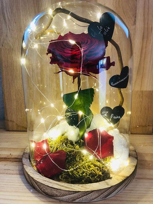 Rose eternelle #1