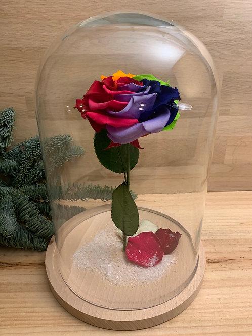 Rose eternelle #32