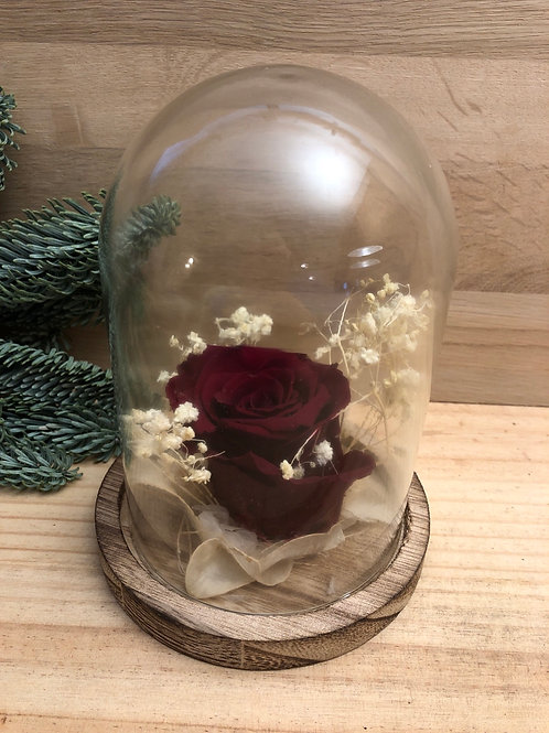 Rose éternelle #103