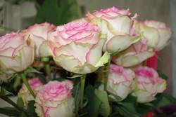 Rose Rose - Esperance