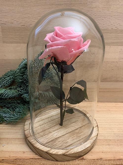Rose eternelle #45