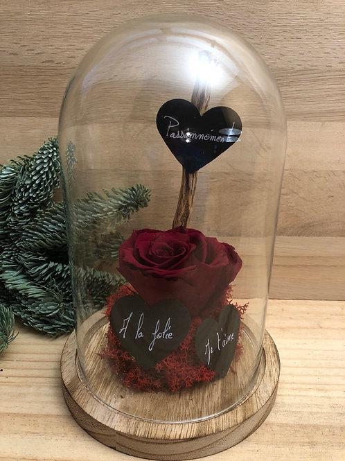 Rose éternelle #85