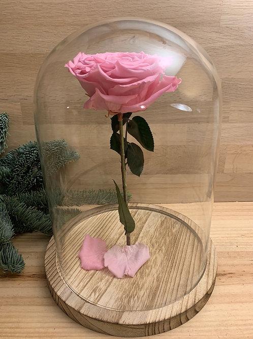 Rose eternelle #28