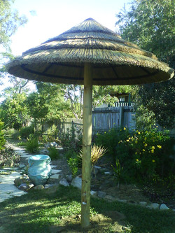 African Cape Reed Umbrella