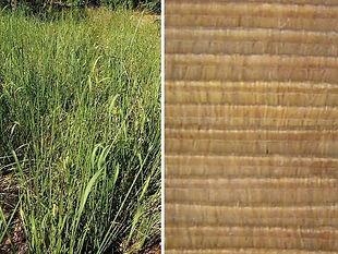 Product Blady Grass Alang Alang