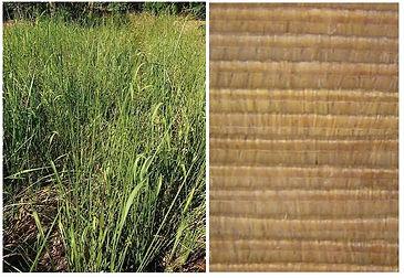 Alang Alang Blade Grass for Bali Huts