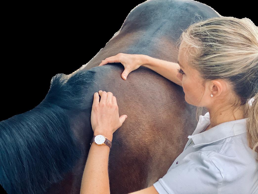 Untersuchung Rücken transparent auslaufe