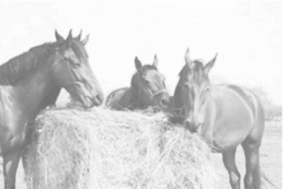 Online Tierarzt Pferd Fütterung