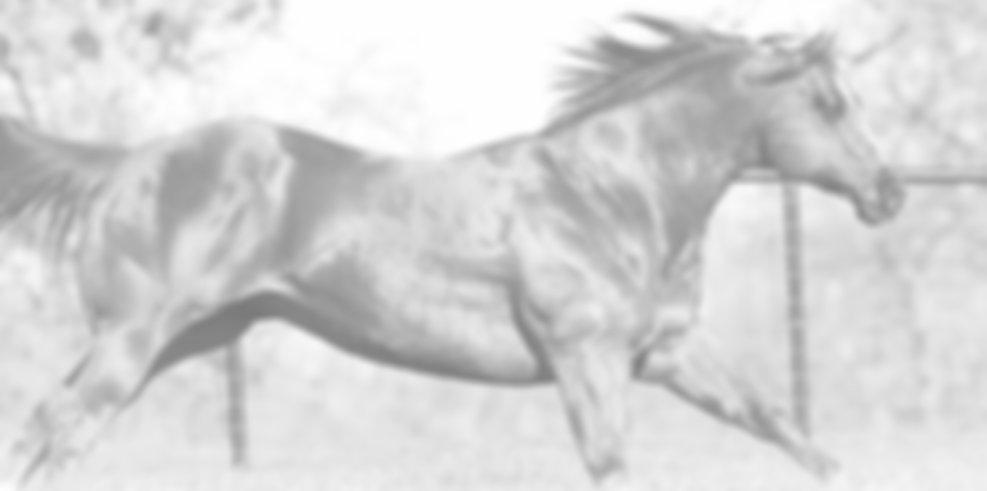 Online Tierarzt Pferd Muskulatur