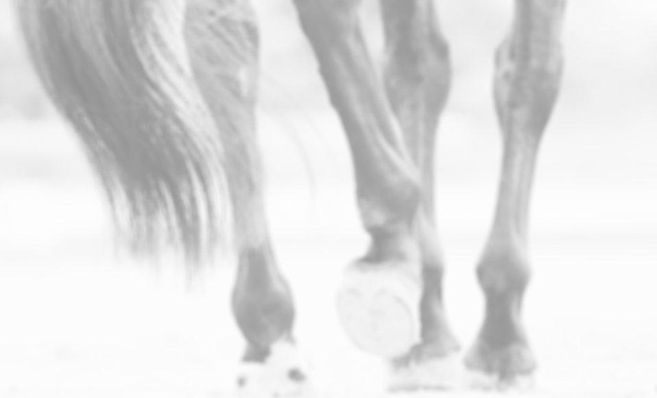 Online Tierarzt Pferd Sehnen und Gelenke
