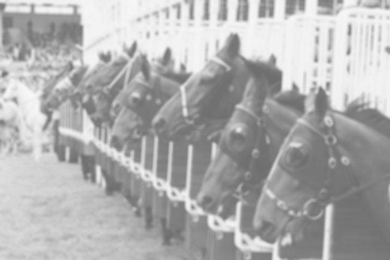 Online Tierarzt Pferd PowerMineral