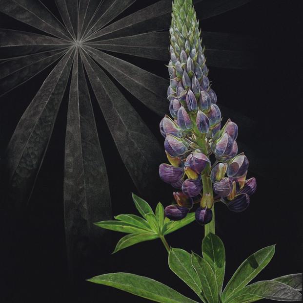 Illuminated Lupine
