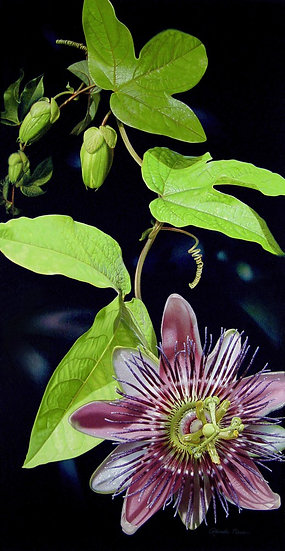 Divine Offering/Passionflower