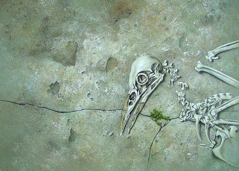 Crow Skeleton