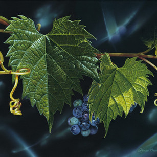 Fruit of the Vine/Summer Grape