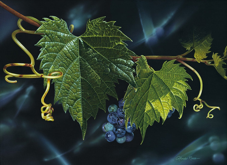 Fruit of the Vine/Summer Grape