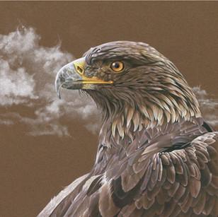Golden Eagle 3