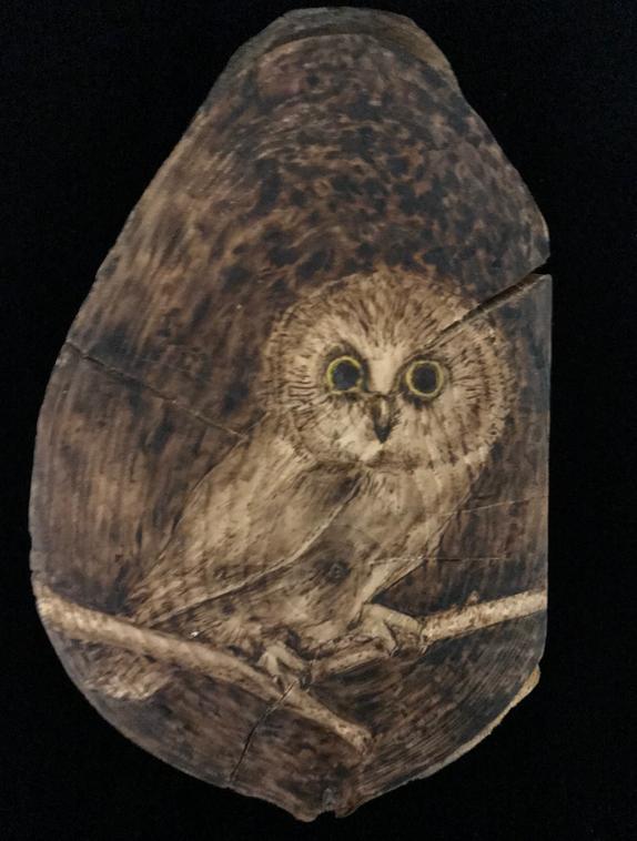 Sawet Owl