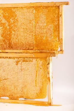 honeycomb frame