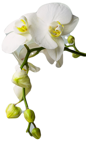 Orchid_edited_edited.png