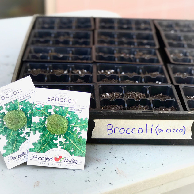 How to grow from seed
