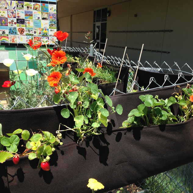 Maintaining school gardens