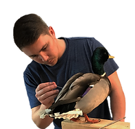 Waterfowl Taxidermy Course