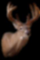 Deer bg x1.png