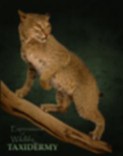 Bobcat 2019c.png