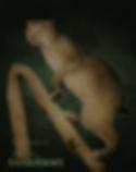 Bobcat 2019b.png