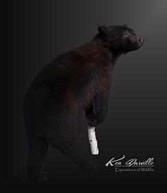 Aarons Bear.png